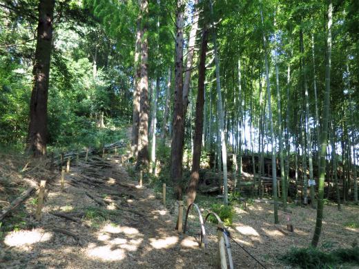Kashinokiyama Nature Park