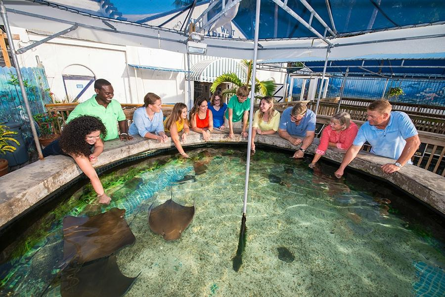 Key West Aquarium Fl Top Tips Before You Go With Photos Updated 2017 Tripadvisor