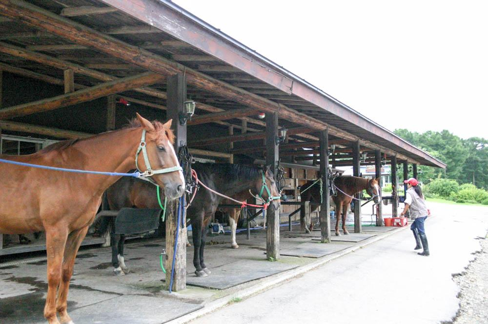 Hidaka-cho Japan  City new picture : Hidaka Kentucky Farm Hidaka cho, Japan Lodge Beoordelingen ...