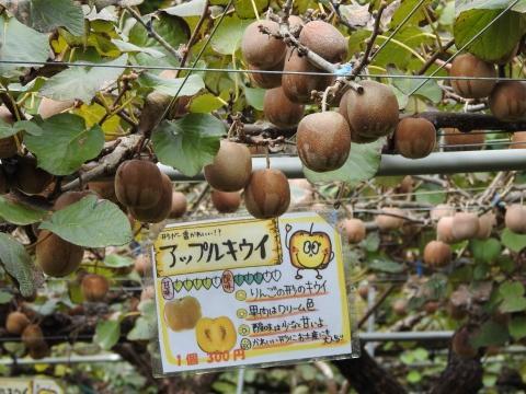 Kiwi Fruits Country Japan