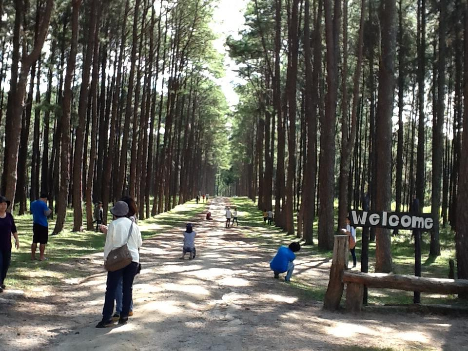 Bo Kaeo Pine Tree Garden