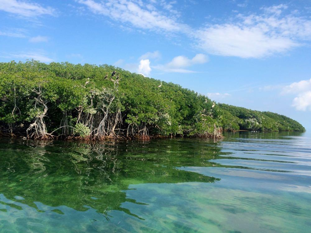 the top 10 things to do near bahia honda state park and beach rh tripadvisor com things to do in the keys on a rainy day things to do in the florida keys on a rainy day