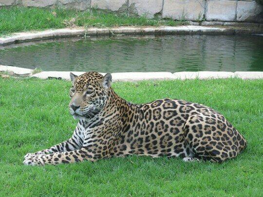 Zoo Cordoba