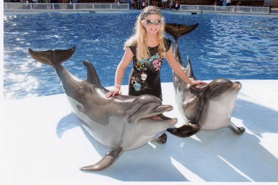 Sharm El Sheikh Dolphins