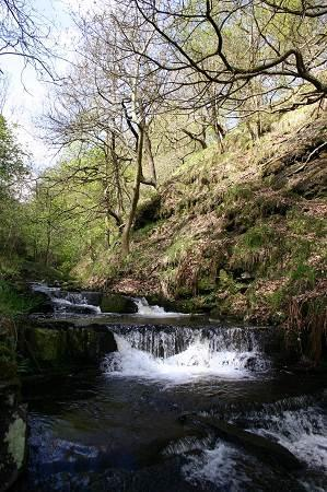 Gorpley Clough  Local Nature Reserve