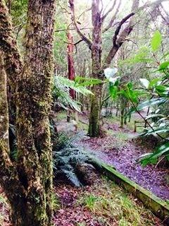 Melba Gully National Park