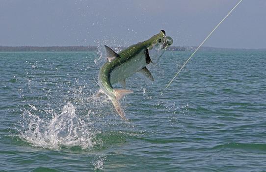 Yachtfish