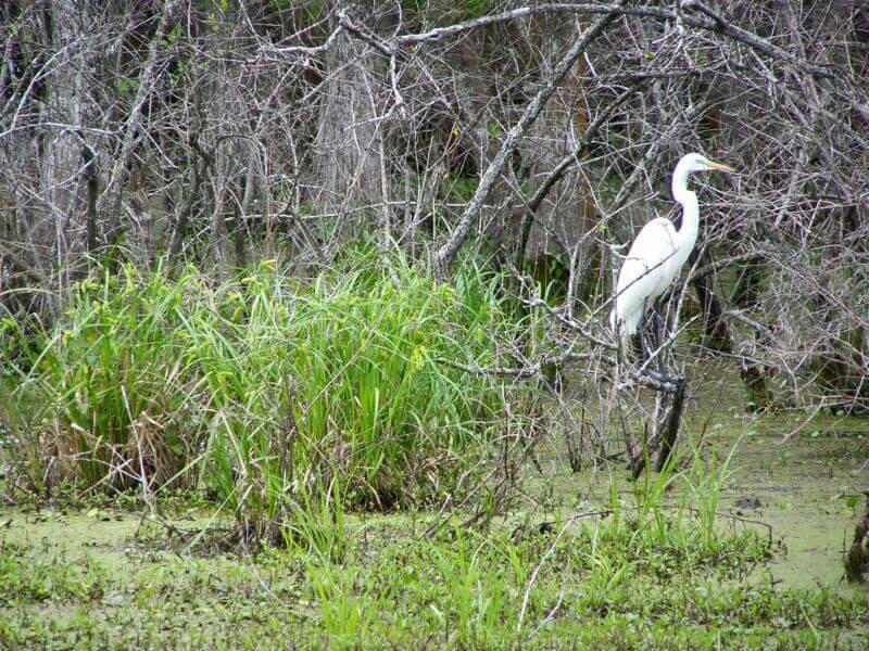 The Top 10 Things to Do Near Zoo Of Acadiana Broussard TripAdvisor
