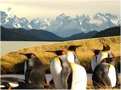 Tours Punta Arenas - Day Tours
