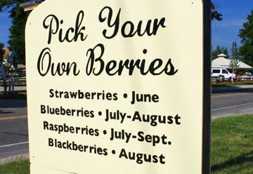 Patty's Berries & Bunches