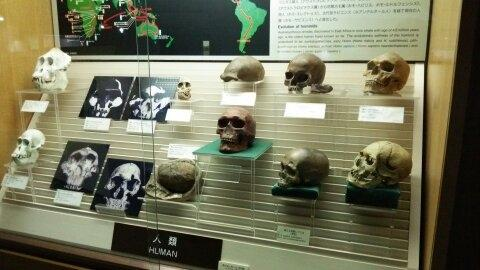 Tohoku University of Natural History