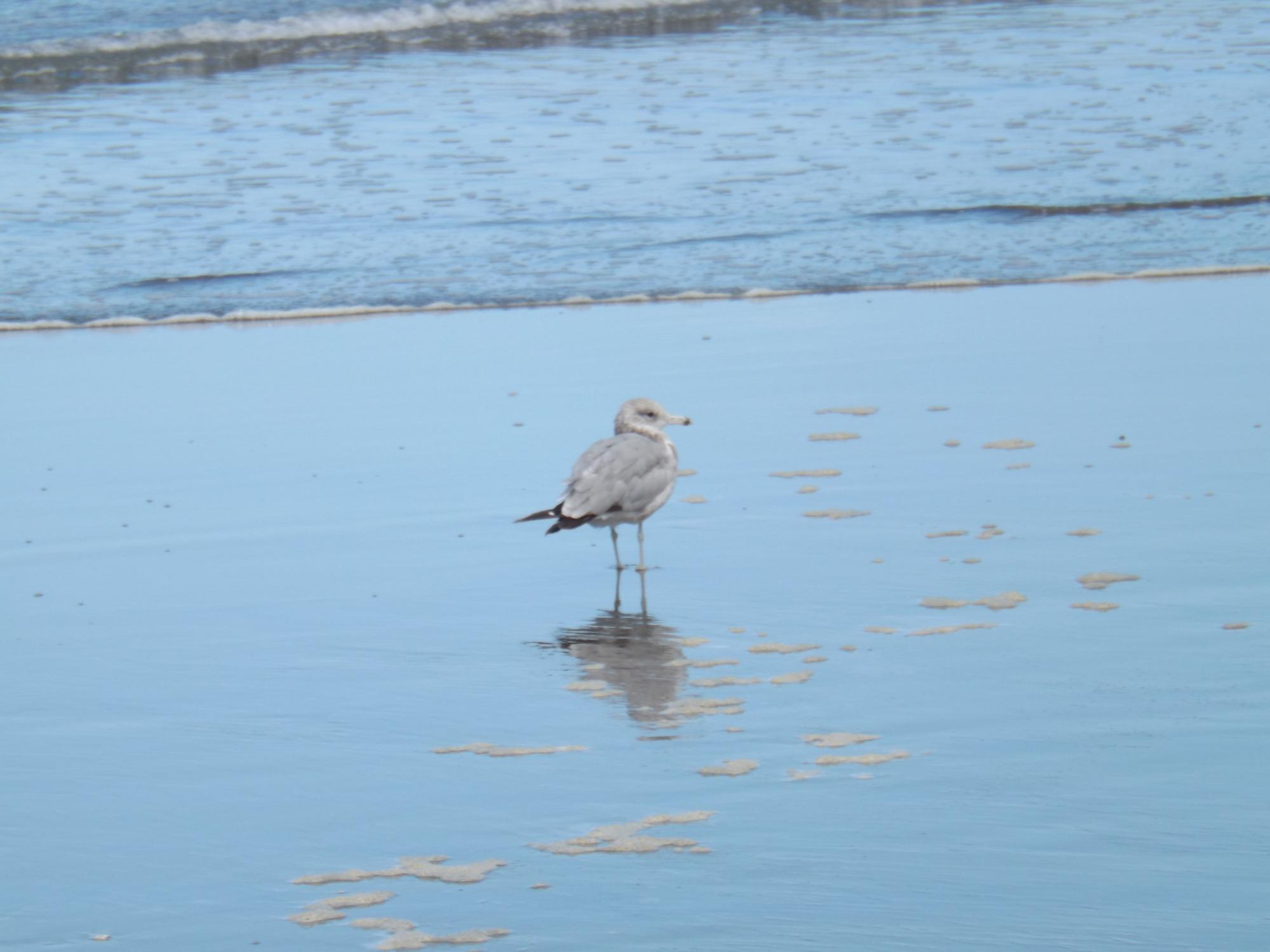 海岸沿いの海鳥