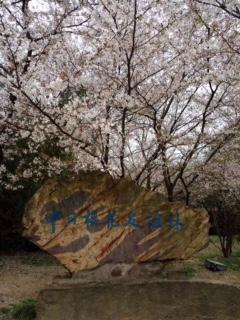 龙头渚公园