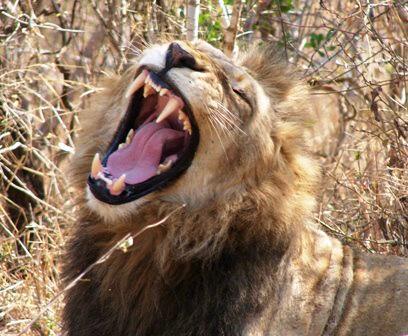 Kruger Africa Safaris - Day Tours