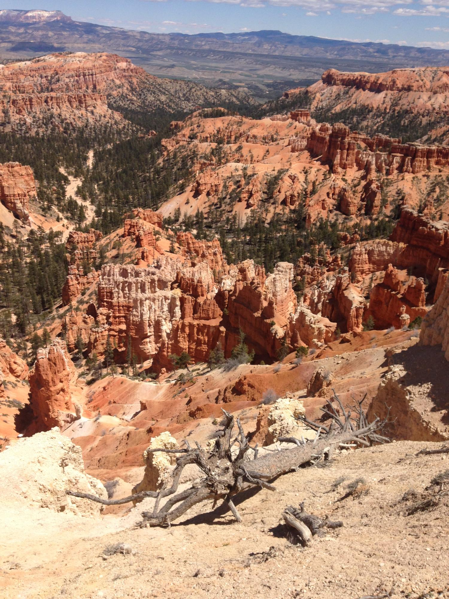 Hoodoos and green