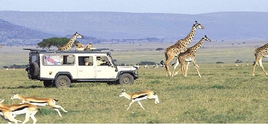 Camping Tours & Safaris