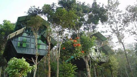Forest Inn Tree House