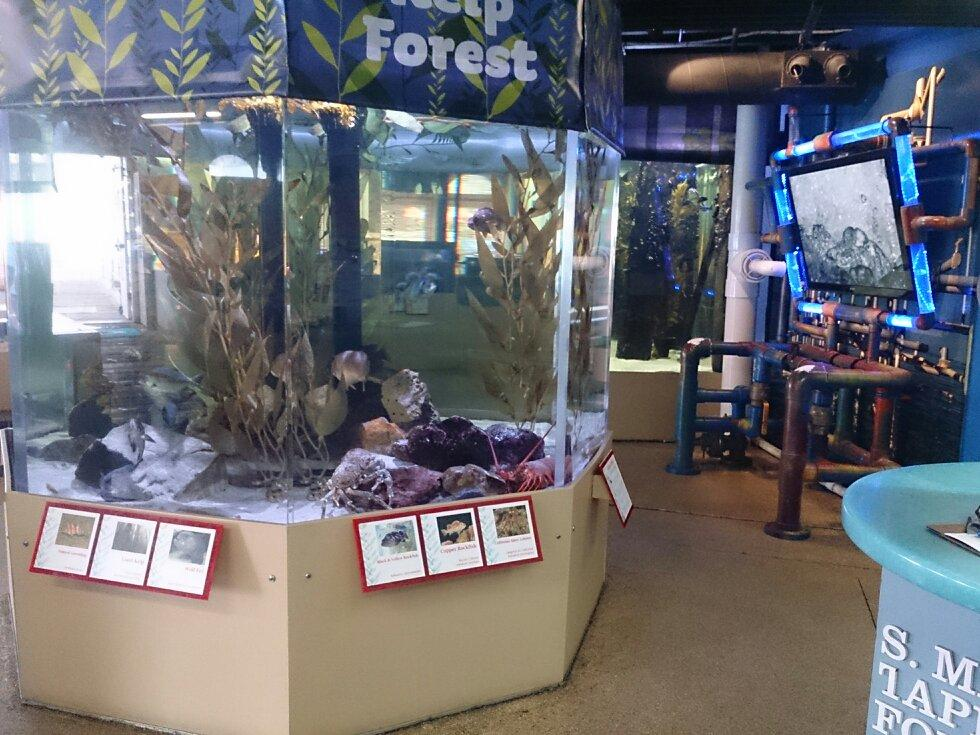 Santa Monica Pier Aquarium Ca Top Tips Before You Go With Photos Tripadvisor