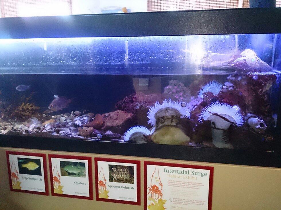Santa Monica Pier Aquarium Ca Top Tips Before You Go
