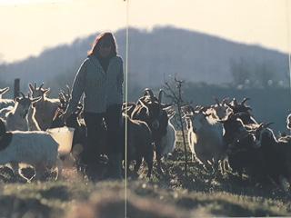 Chianti Cashmere Goat Farm