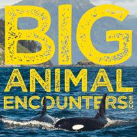 Big Animal Encounters