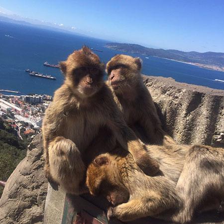 Gibraltar Taxi Tours