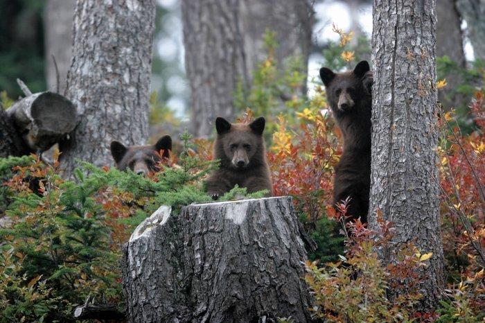 Whistler's local wildlife