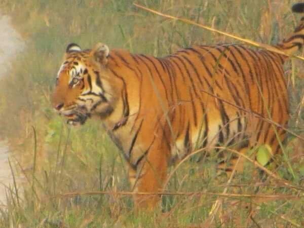 Tiger Wildlife Camp