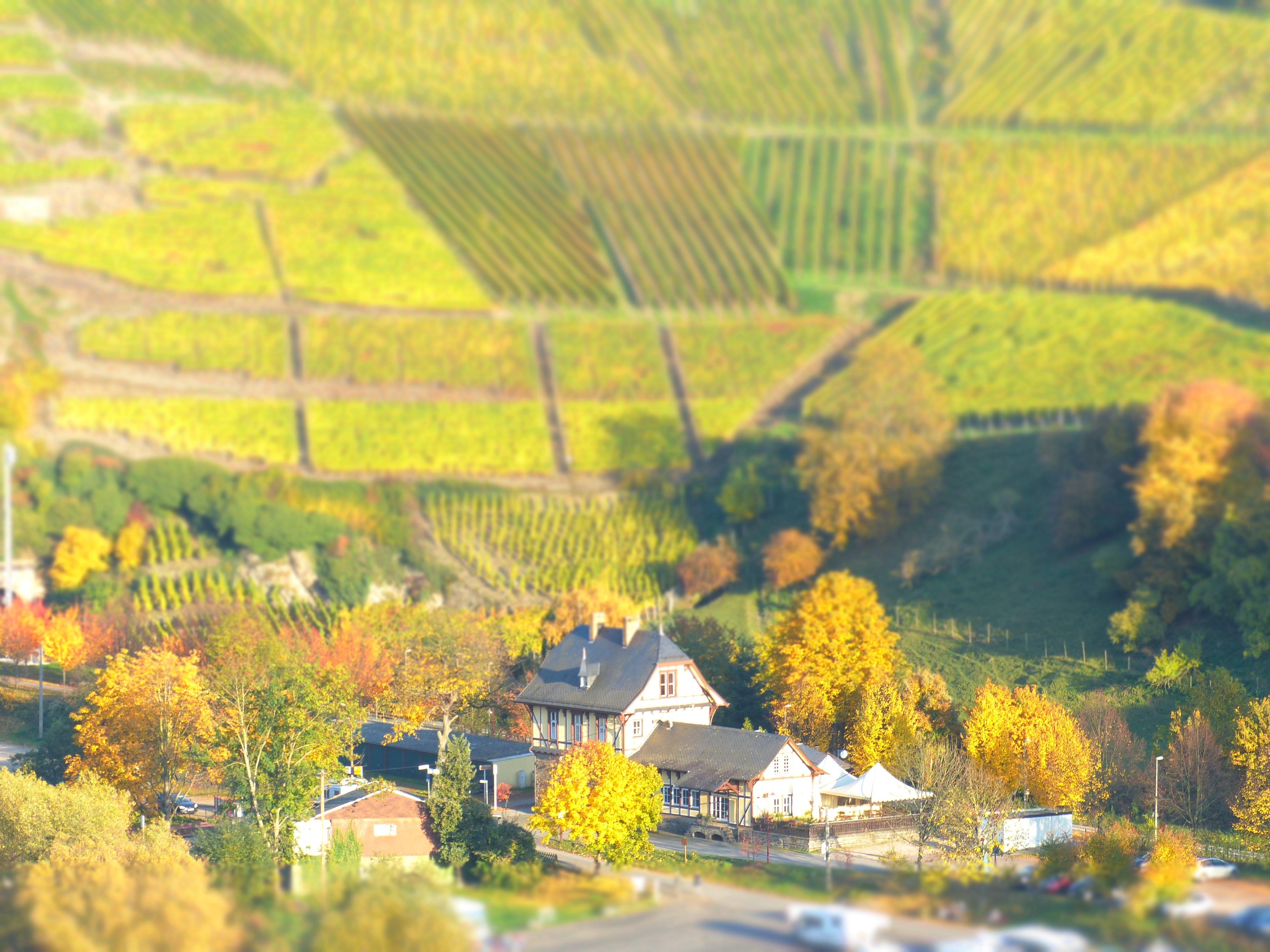 Top 3 International food in Mayschoss, Rhineland-Palatinate, Germany