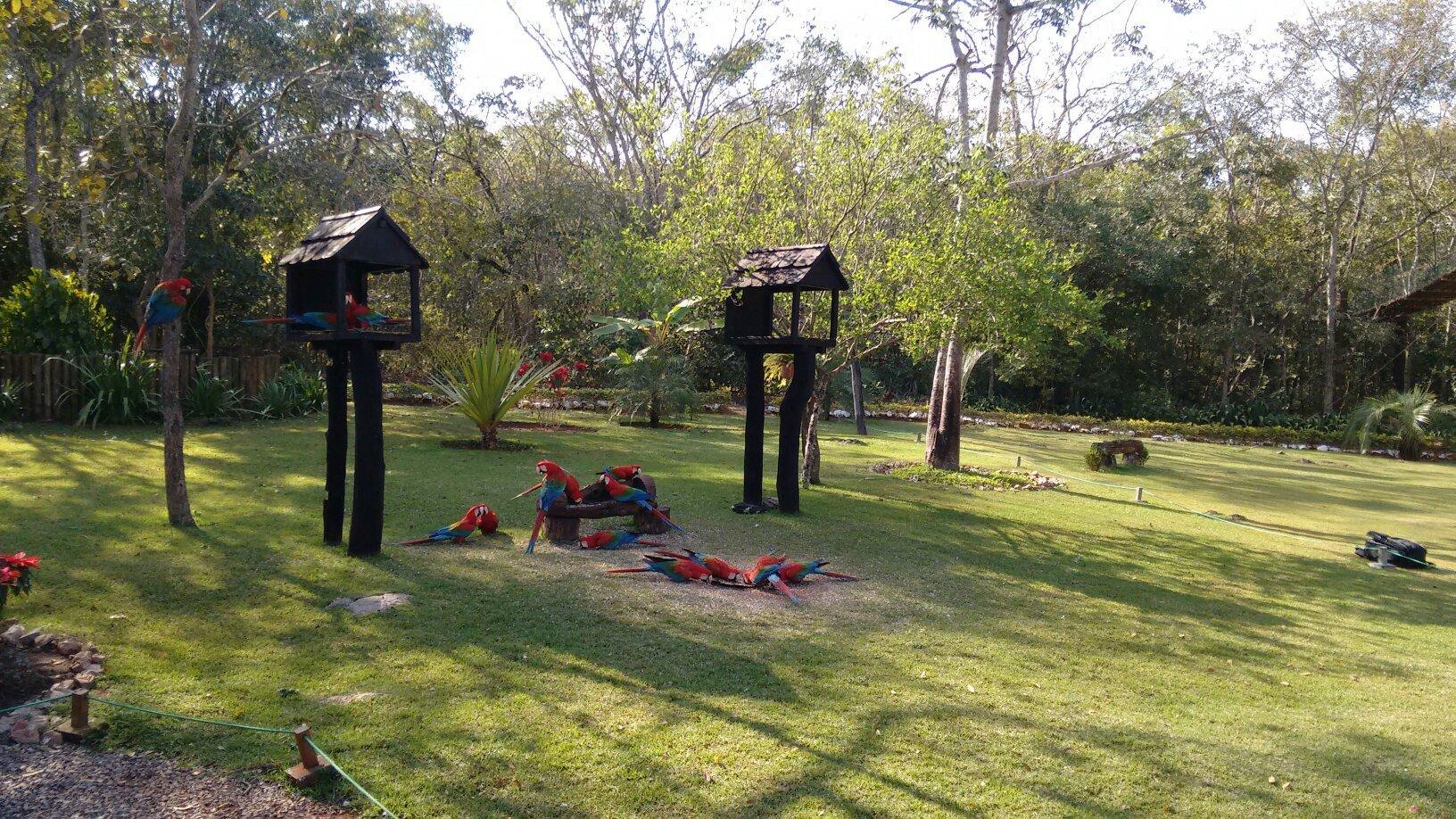 construir gruta jardim : construir gruta jardim:Qué hacer en Bonito