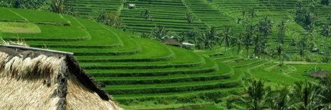 Bali Ultimate Adventure - Day Tours