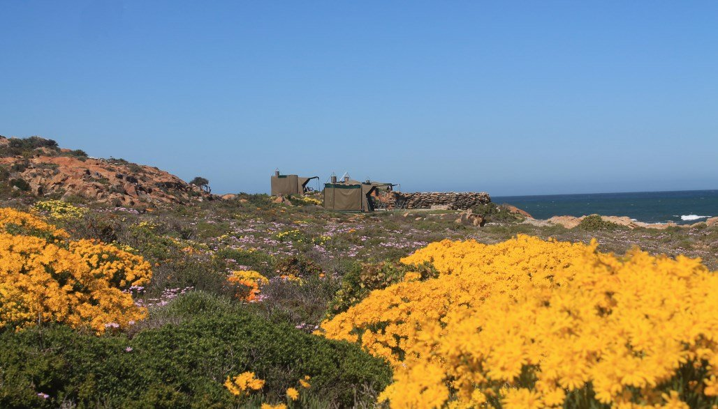 Namaqua Flower Beach Camp