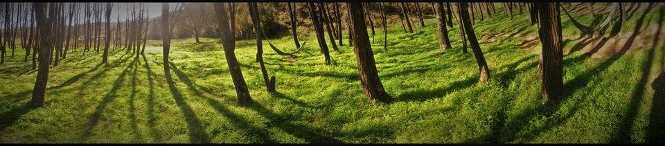 hamaca bajo el bosque