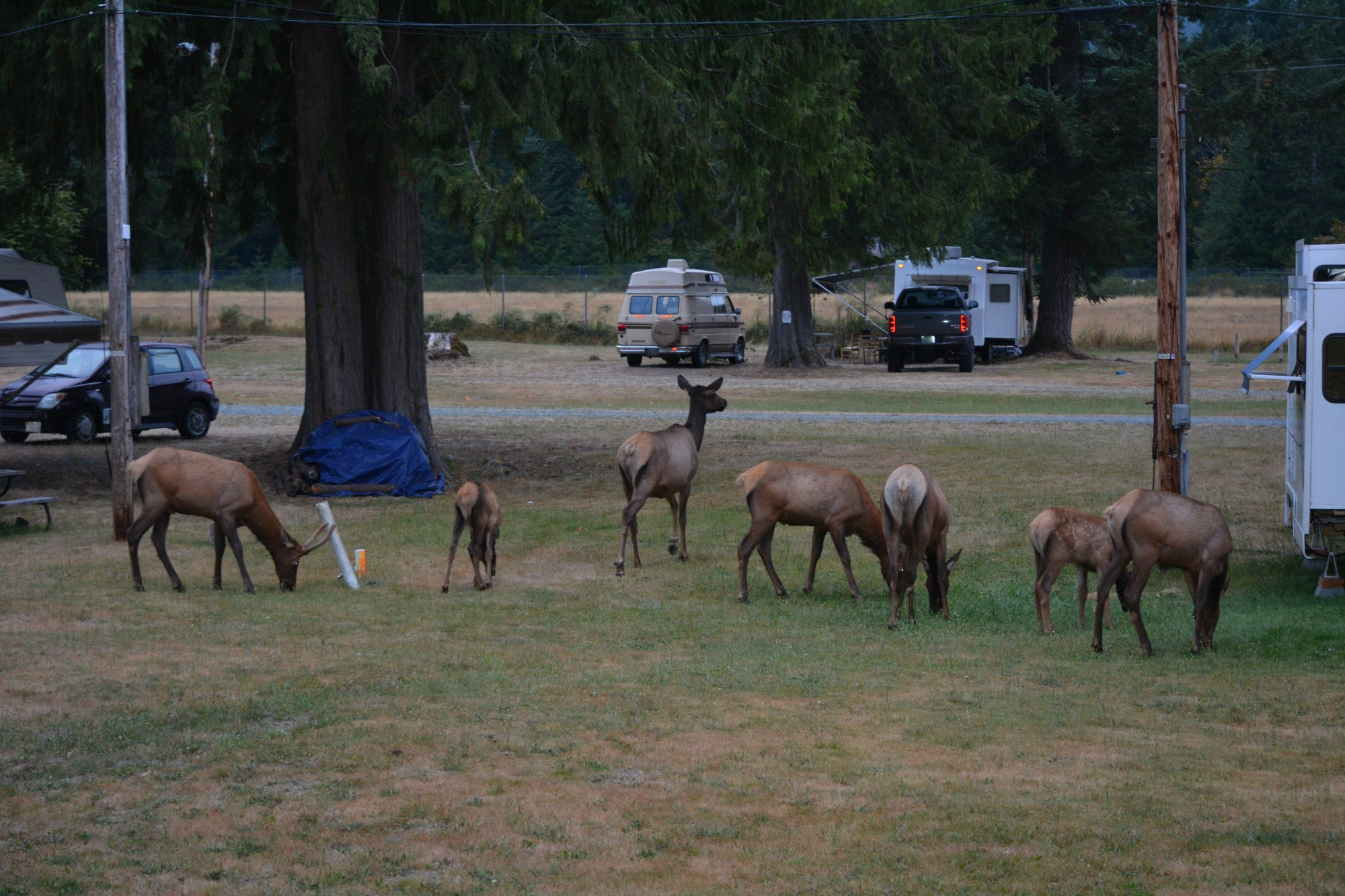 Packwood RV Park & Campground