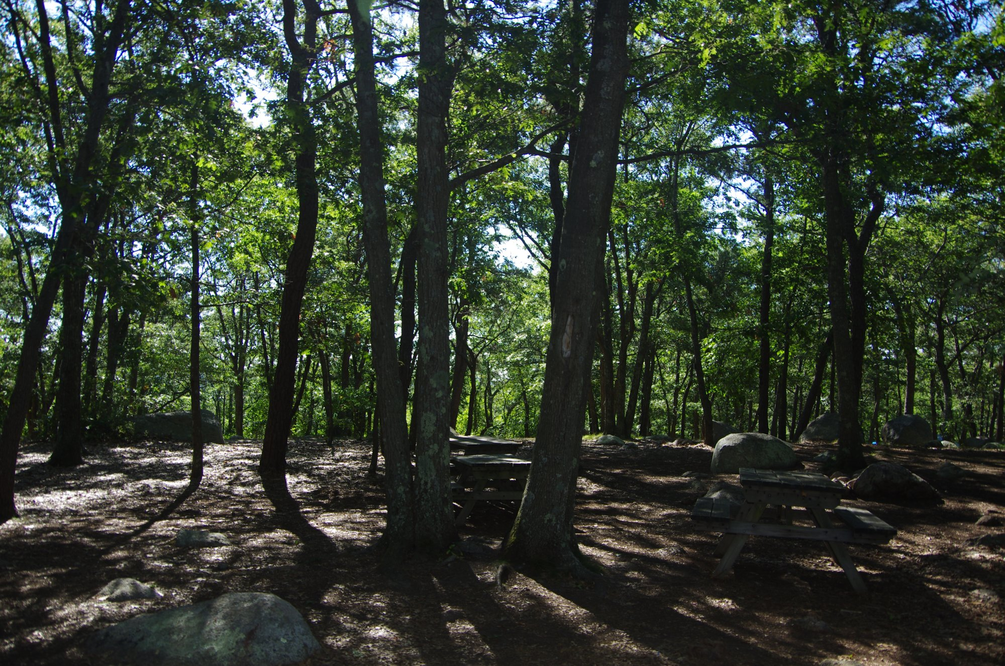 Cape Ann Camp Site Updated 2017 Campground Reviews
