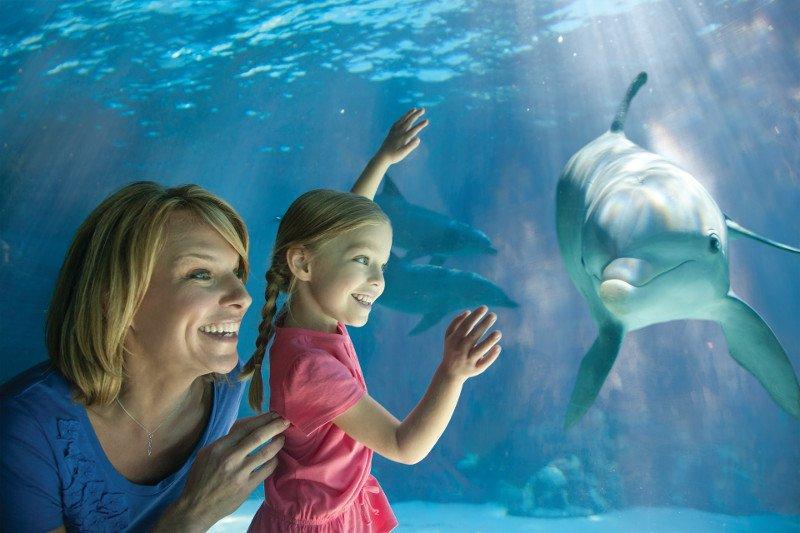 Dolphin Underwater Viewing
