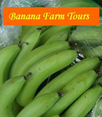 ‪Banana Farm Tours‬