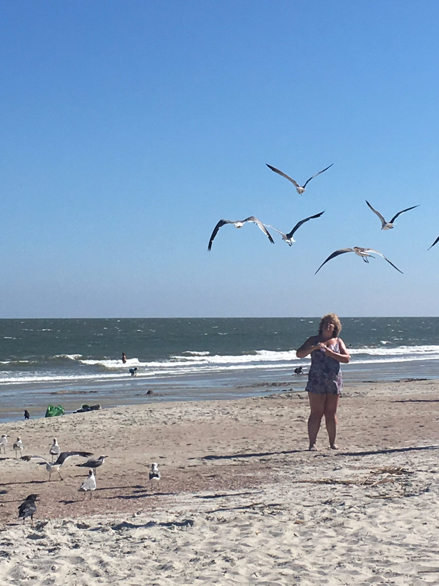 Caught this tourist feeding the birds at the Beach. This is a great attraction for many people.