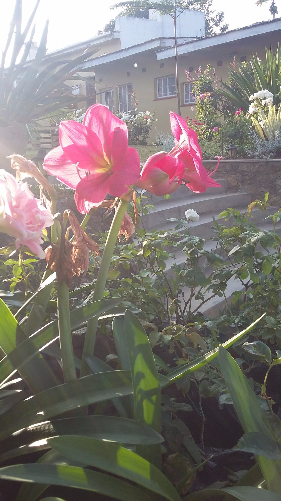 Village green blantyre malawi lodge reviews photos tripadvisor