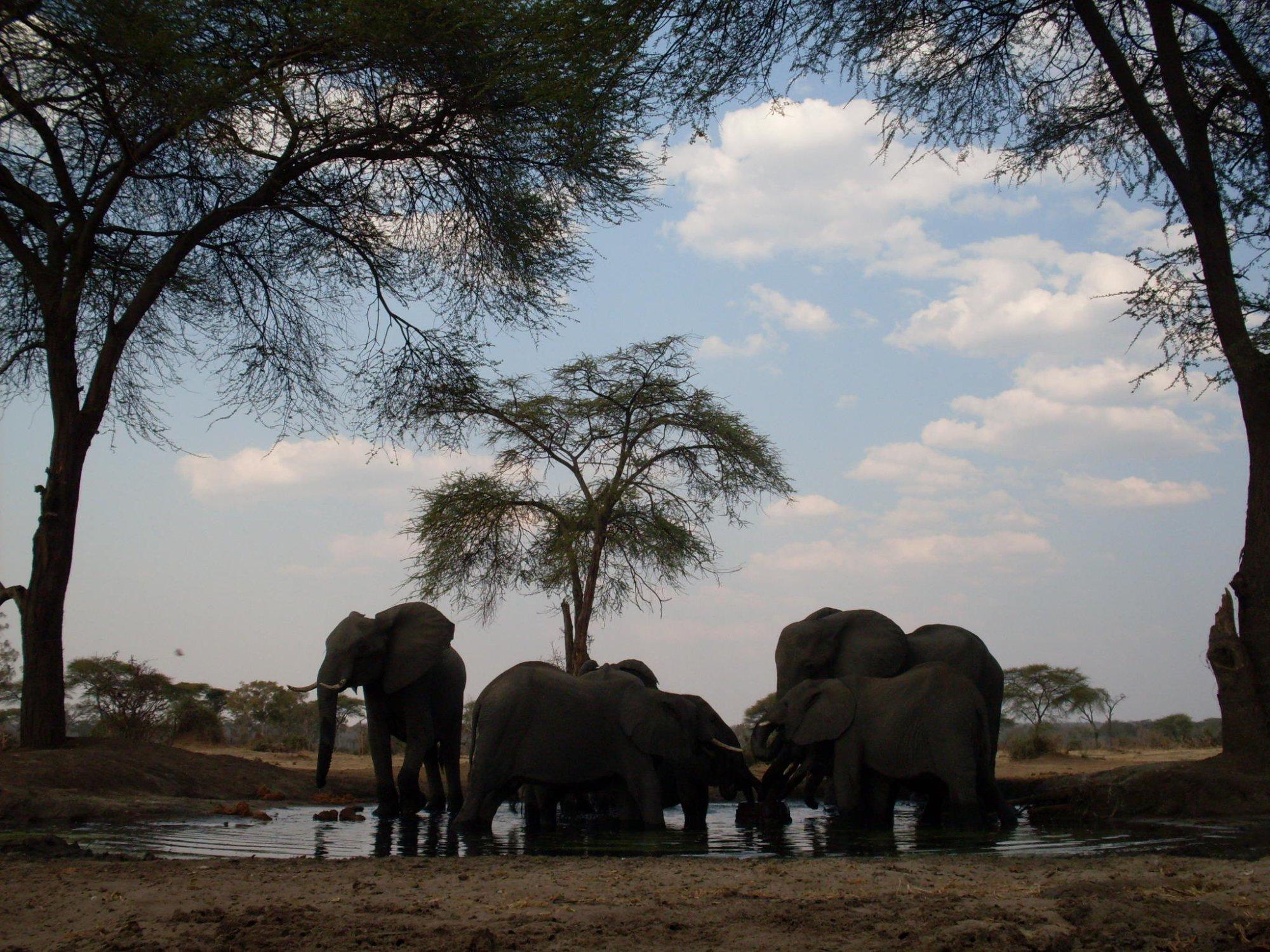 Senyati Safari Camp