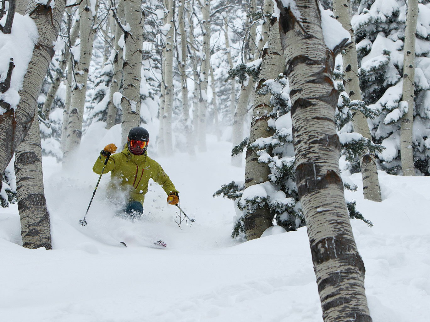 Skiing Powder in Aspen Grove