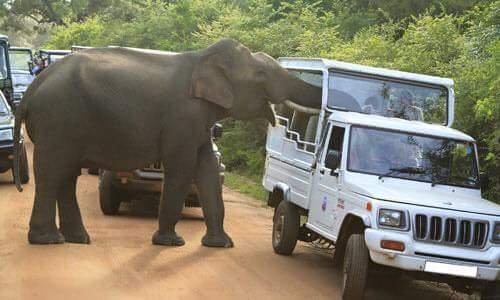 Safari Tour in Udawalawe