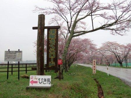Yushun Sakura Road