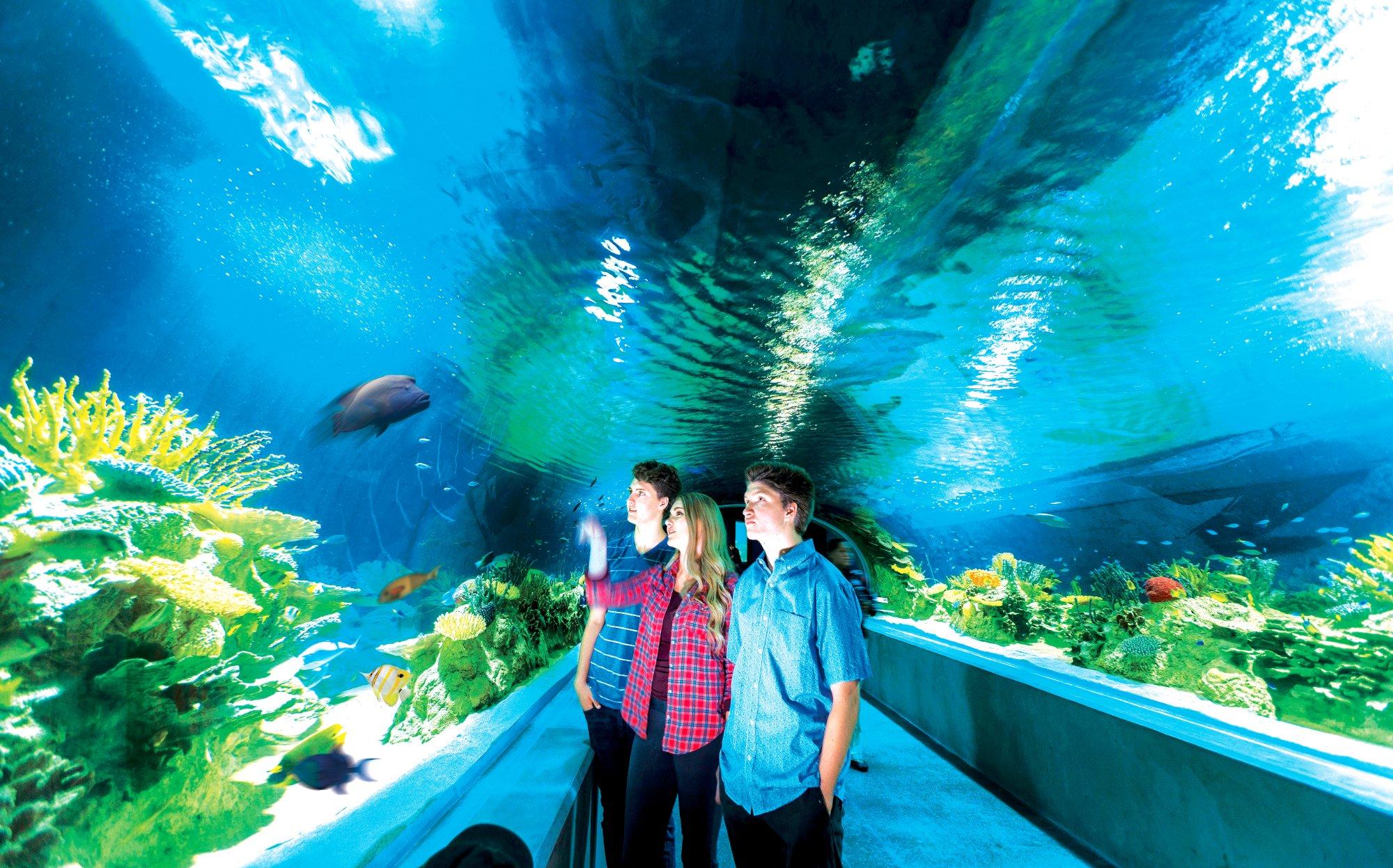 Odysea Aquarium Scottsdale Az Top Tips Before You Go