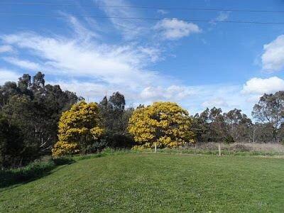 Yarra Flats Park