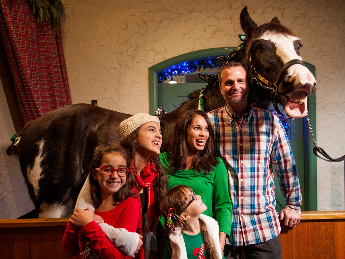 Clydesdales at Christmas Town
