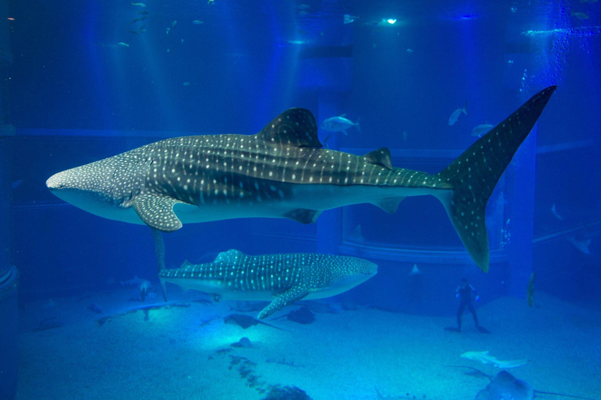 Osaka Aquarium Kaiyukan (Japan): Top Tips Before You Go ...