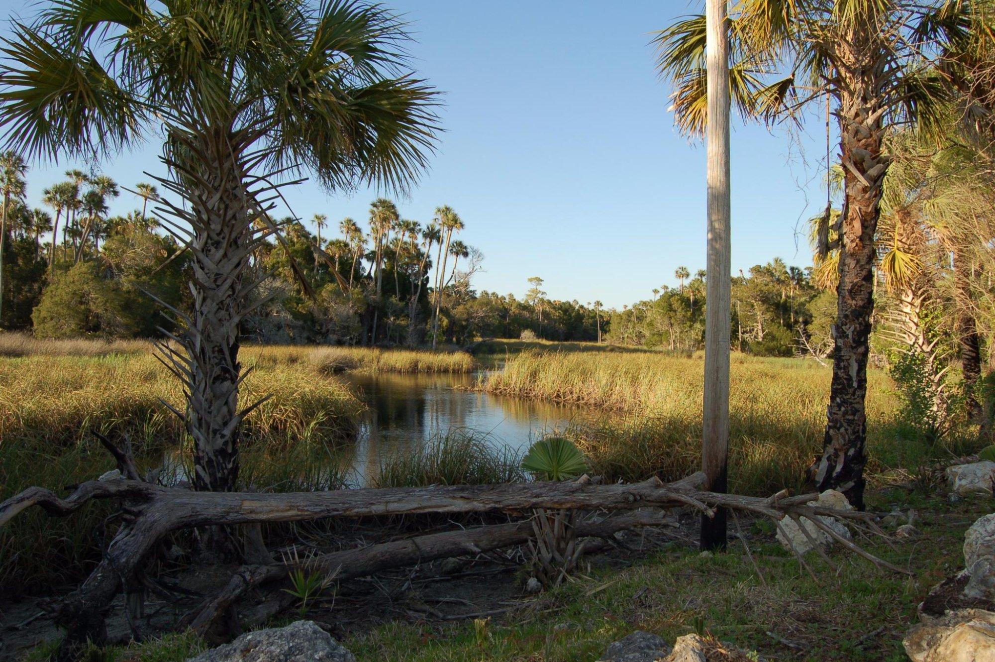 Crystal River Preserve State Park (FL): Top Tips Before ...