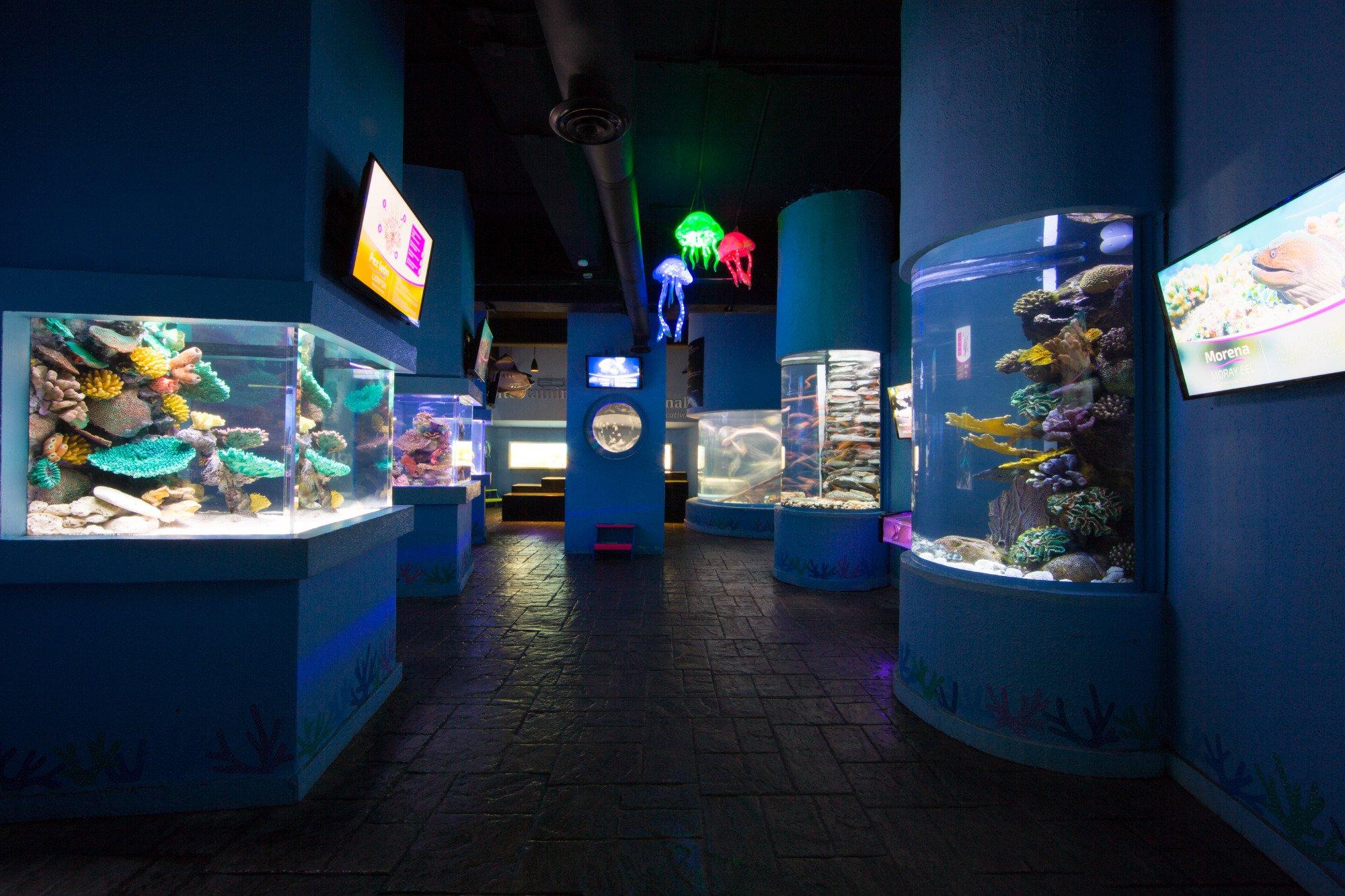 Enbarcadero picture of aquamarina beach hotel cancun tripadvisor - Interactive Aquarium