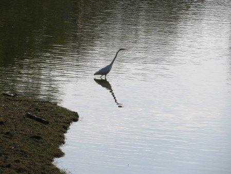 Daibutsu Pond